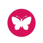 ateliers-echange-experiences-femmes-entrepreneurs-antilles