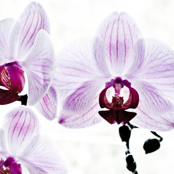 orchidee-mindset-succes-grandir-ensemble